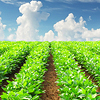 Service Agricole et Agroalimentaire